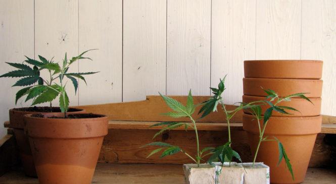 Will New Jersey Marijuana Legalization Include Home Grow?