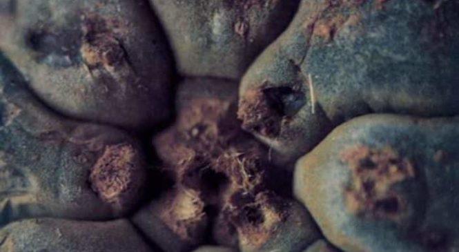 Flashback Friday: Psychedelic Cacti