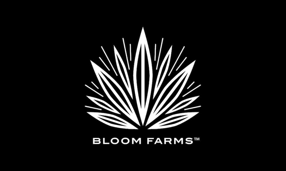 The Black Friday Guide To Cannabis Brands Giving Back