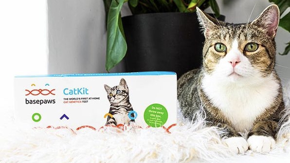 Get $30 off this cat DNA kit